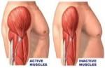 علاج ضمور العضلات بالخلايا الجذعية 00201286828929